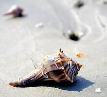 Be free little hermit crab by anchorsofhope