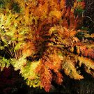 Fern in autumn by Paul Richards