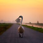 A long road by THHoang