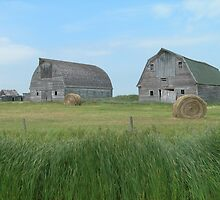 Old Barns by Kathleen Brant