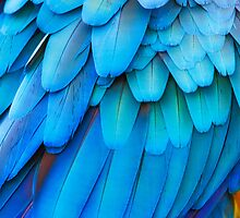 Blue feathers by Paul Richards