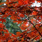 Red Leaves on a Fall Morning by Anthony M. Davis