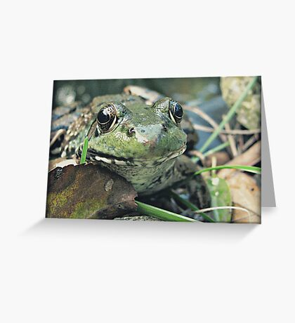 Smile Frog Style Greeting Card