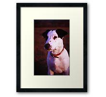 Puppy Patch Framed Print