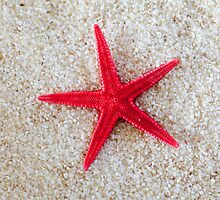 Starfish by Markku Vitikainen