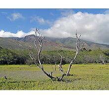 Molokai Surrealism  Photographic Print