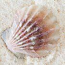 Scallop on Sand by Markku Vitikainen