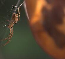 Spider on Honesty by brianfuller75