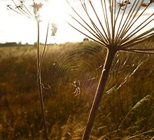 Spider Web by Vicki Spindler (VHS Photography)