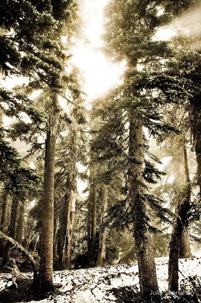 Shrouded in mist by Julie Shanahan
