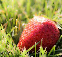 Berry  by addipaddi