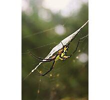 Garden Spider Photographic Print