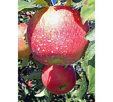 Honey Crisp Duo  Photographic Print