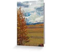 Aspens from Highway 24  Greeting Card