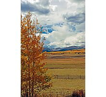Aspens from Highway 24  Photographic Print