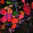Glorious Autumn Colours #1 by goddarb