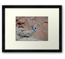 Mister Blue  Framed Print