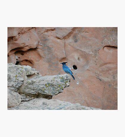 Mister Blue  Photographic Print