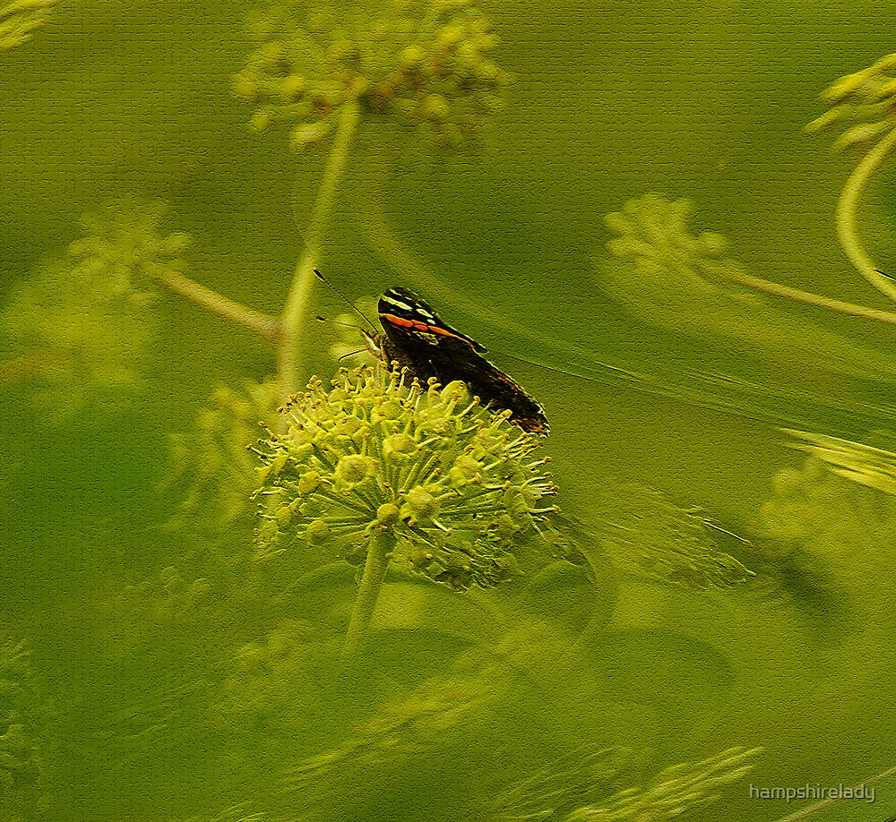 In a Sea of Green by hampshirelady