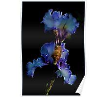 Magical Iris Poster