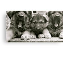 They're Yawning!! (German Shepherd Puppies) Canvas Print