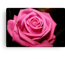 A Rose from Jordan Canvas Print