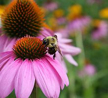 Bee and Flower by Aaron Alviano
