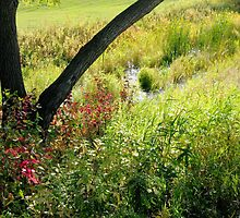 An Assiniboine Park View by kenspics