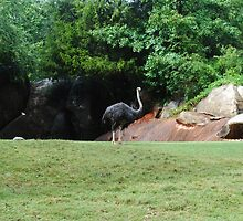Ostrich by lroof