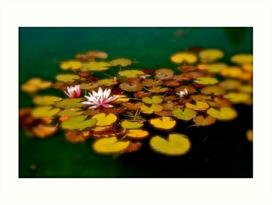 Water Lilies by Linda Bianic