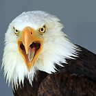 Bald Eagle by Teresa Zieba