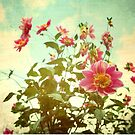 pink by Jackie Cooper