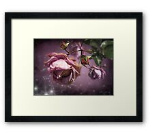 Dusky Pink Roses Framed Print