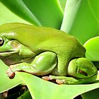 It's easy being Green by Nicki Baker