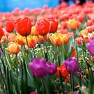 Colourful flowers by Ashlee Betteridge