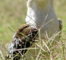 Kookaburra in the Grass by Nicki Baker