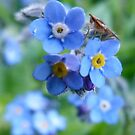 Forget Me Not by DEB CAMERON