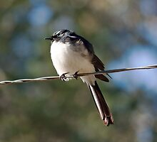 Bird on a Wire by jayneeldred