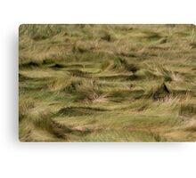 Sand Grass Canvas Print