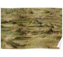 Sand Grass Poster