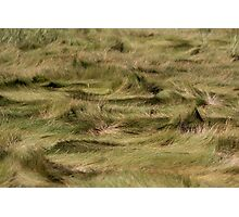 Sand Grass Photographic Print
