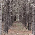 Doorway In The Woods by KimberlyBlack