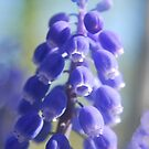 Spring Blue by Sheri Nye
