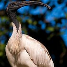 Southbank Parklands Ibis 2 by Jaxybelle