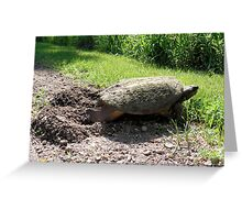 Snapping Turtle burying her eggs Greeting Card
