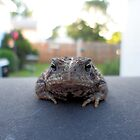 Handsome Toad by Barberelli