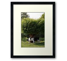 Fighting for a place in the shade Framed Print
