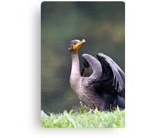 Drying Off Canvas Print