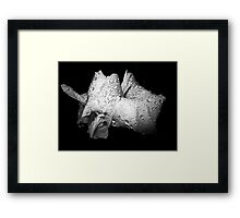 Raindrop Lily Framed Print