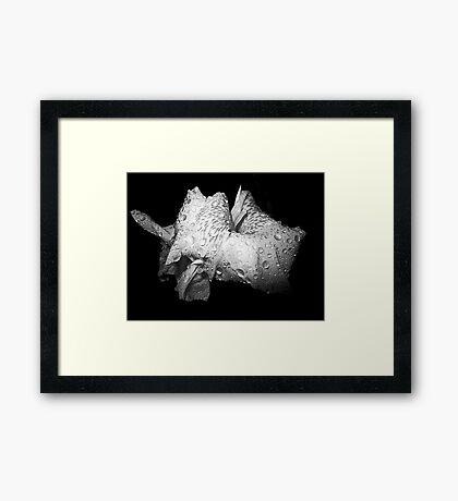 Raindrop Lily Framed Print